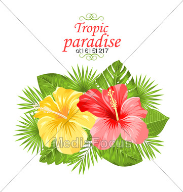 Illustration Beautiful Colorful Hibiscus Flowers Blossom And Tropical Leaves, Isolated On White Background - Vector Stock Photo