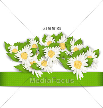 Illustration Beautiful Flowers Camomile With Shadows On White Background - Vector Stock Photo
