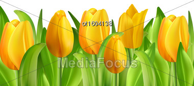 Illustration Beautiful Flowers Tulips Isolated On White Background, Spring Nature Wallpaper - Vector Stock Photo