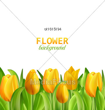 Illustration Beautiful Yellow Flowers Tulips Isolated On White Background, Nature Wallpaper - Vector Stock Photo
