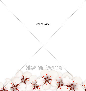 Illustration Blooming Sakura Flowers Blossom Isolated On White Background - Vector Stock Photo