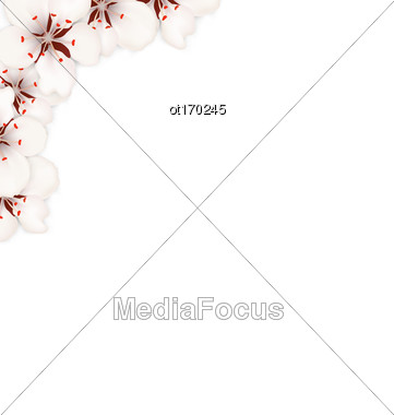 Illustration Border Made In Sakura Flowers Blossom Isolated On White Background - Vector Stock Photo