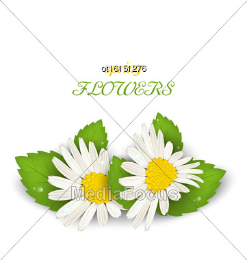 Illustration Camomile Flowers With Shadows On White Background. Spring Flowers - Vector Stock Photo