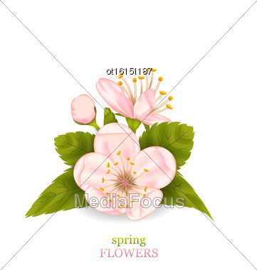 Illustration Cherry Blossom With Leaves Isolated On White Background. Spring Flowers - Vector Stock Photo
