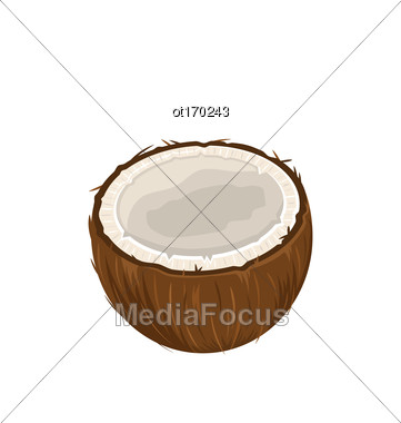 Illustration Coconut Fruits Isolated On White Background - Vector Stock Photo