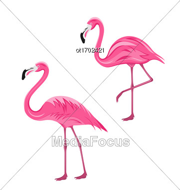 Illustration Couple Pink Flamingos Isolated On White Background, Exotic Tropical Birds - Vector Stock Photo