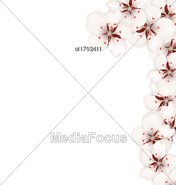 Illustration Floral Background With Sakura Or Cherry Flowers Blossom - Vector Stock Photo