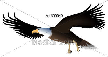 Illustration Flying Eagle Isolated On White Background - Vector Stock Photo