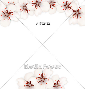 Illustration Frame With Sakura Flowers Blossom, Floral Banner For Springtime - Vector Stock Photo