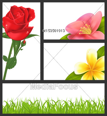 Illustration Invitation Brochure With Beautiful Flowers (rose, Quince; Frangipani) And Grass, Template Card Layout, Copy Space For Your Text - Vector Stock Photo