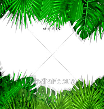 Illustration Natural Frame With Green Tropical Leaves, Summer Beautiful Background - Vector Stock Photo