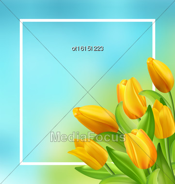 Illustration Natural Frame With Yellow Tulips Flowers, Copy Space For Your Text. Beautiful Nature Card - Vector Stock Photo