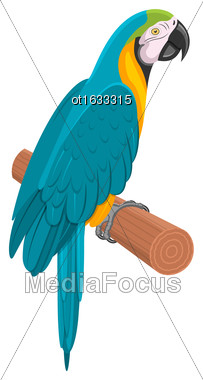 Illustration Pretty Blue Parrot Ara On Branch. Bird Isolated On White Background. Endangered Animal - Vector Stock Photo