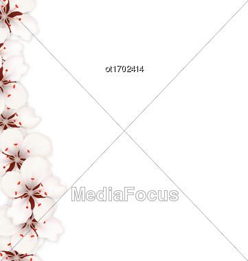 Illustration Sakura Flowers Background. Cherry Blossom Isolated On White Background - Vector Stock Photo