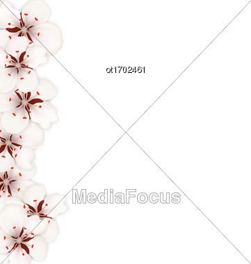 Illustration Sakura Flowers, Floral Banner For Springtime - Vector Stock Photo