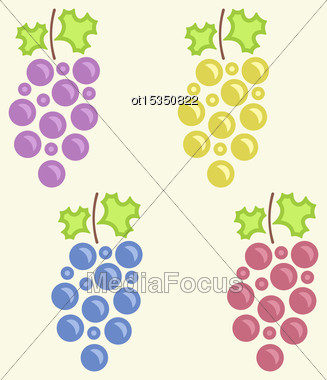 Illustration Set Colorful Bunches Of Grape, Vintage Flat Icons - Vector Stock Photo