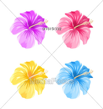 Illustration Set Of Colorful Hibiscus Flowers Blossom Isolated On White Background - Vector Stock Photo