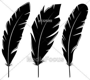 Illustration Set Feathers Isolated On White Background - Vector Stock Photo