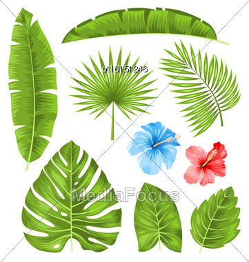 Illustration Set Of Tropical Leaves, Collection Plants Isolated On White Background - Vector Stock Photo