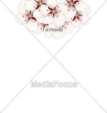 Illustration Spring Background With Cherry Blossom, Place For Text - Vector Stock Photo