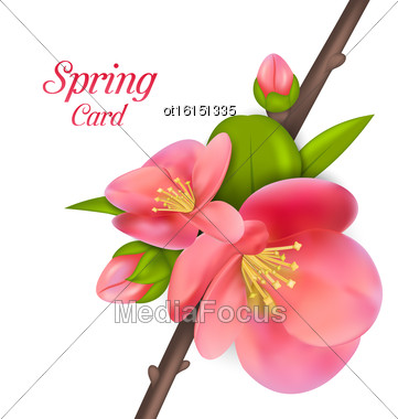 Illustration Spring Card With Branch With Buds Of Japanese Quince (Chaenomeles Japonica) In Bloom, Springtime Awakening - Vector Stock Photo