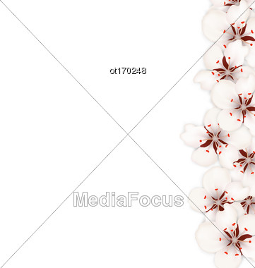 Illustration Spring Nature Background With Sakura Flowers Blossom - Vector Stock Photo