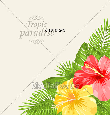 Illustration Vintage Greeting Card With Colorful Roses Mallow. Tropic Paradise Background - Vector Stock Photo