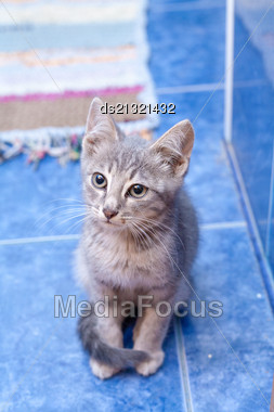 Kitten Sitting Indoors In Blue Room Stock Photo