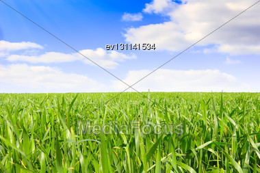 Landscape- Green Grass, The Blue Sky And White Clouds Stock Photo