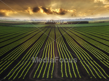 Landscape With Field And Beautiful Sky At Sunrise Stock Photo