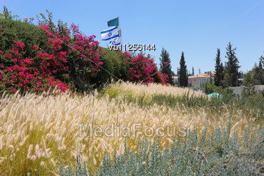 Landscape With Flowers And Grass, The Monastery Latrun In The Background (Israel) Stock Photo