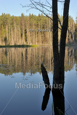 Landscape With Lake And Trees, An Alder Trunk In The Foreground Stock Photo