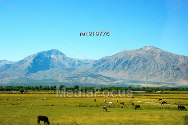Landscape With Mountains, Farm Animals And Trees In Turkey. Stock Photo