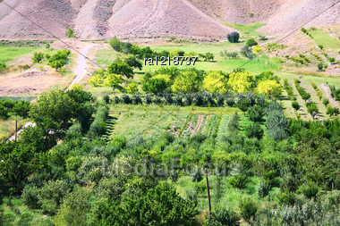 Landscape With Gardens, Oachards In Armenia. Stock Photo