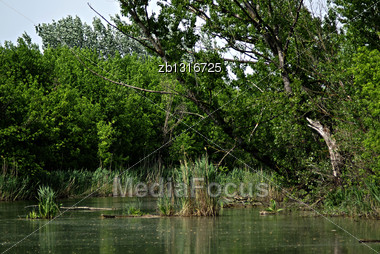 Lazy River Flowing Through Wild Forest, Tree Reflection In Water Stock Photo