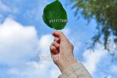 Leaf In Hand On Sky Background Stock Photo