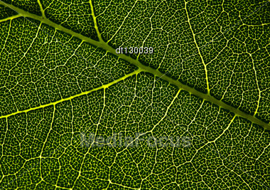 Leaf Veins. Abstract Natural Backgrounds For Your Design Stock Photo