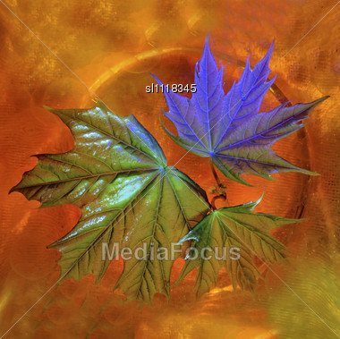 Leaves Of A Young Maple In Water With Orange Silicone Balls. Colour Counteropenwork Illumination Stock Photo
