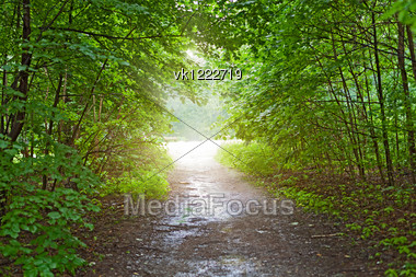 light in the forest after rain Stock Photo