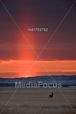 Light Pillar Saskatchewan Prairie Sunset Canada Scenic Stock Photo