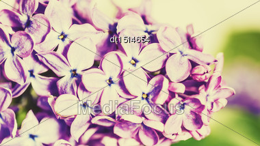 Lilac Flowers, Abstract Floral Backgrounds Stock Photo