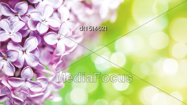 Lilac Flowers With Beauty Bokeh, Abstract Floral Backgrounds Stock Photo