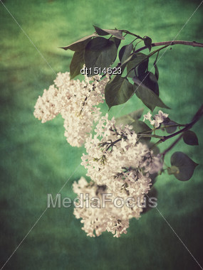 Lilac Flowers. Grungy Floral Backgrounds Stock Photo