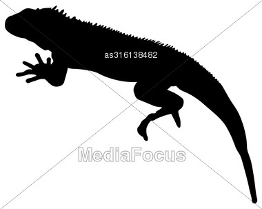 Lizard Is Goanna Silhouette On A White Background. Vector Illustration Stock Photo