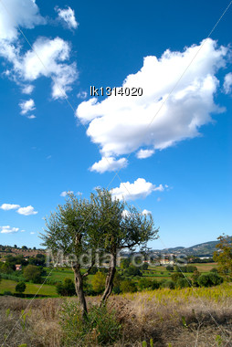 Lonely Tree In The Countryside Against The Blue Sky Italy Stock Photo