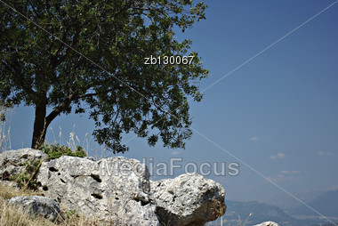 Lonely Tree On The Rocks Against The Clear Blue Sky On A Sunny Summer Day. Stock Photo