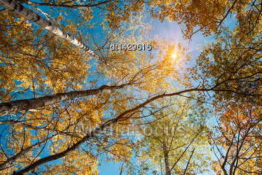 Looking To The Sun, Abstract Autumnal Backgrounds For Your Design Stock Photo