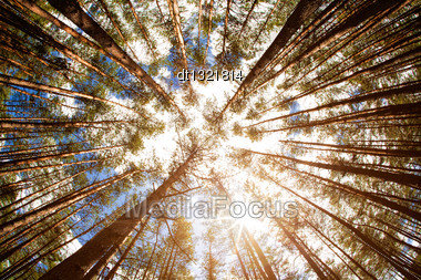 Looking Up, Summer Backgrounds For Your Design Stock Photo