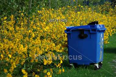 Lot Of Yellow Flowers, Green Leaves And Big Blue Plastic Garbage Container At Summer Sunny Day Stock Photo