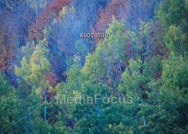 Lush Green Forest, Colorado, USA Stock Photo